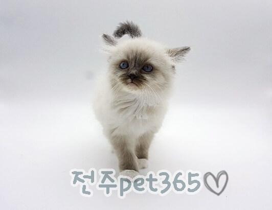 렉돌 (미호)